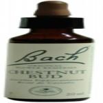 Chestnut Bud - Brote de Castaño Flores de Bach