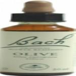Olive - Olivo Flores de Bach