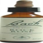 Rock Rose - Heliantemo Flores de Bach